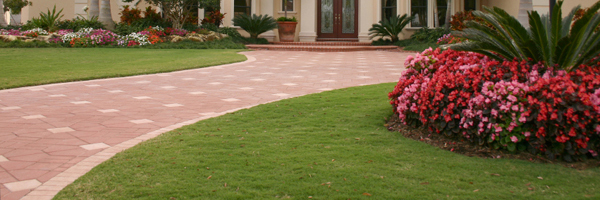 Lawn Care Palm Harbor, Fl