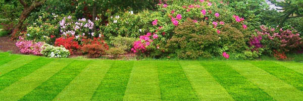 Lawn Care Clearwater Beach, Fl