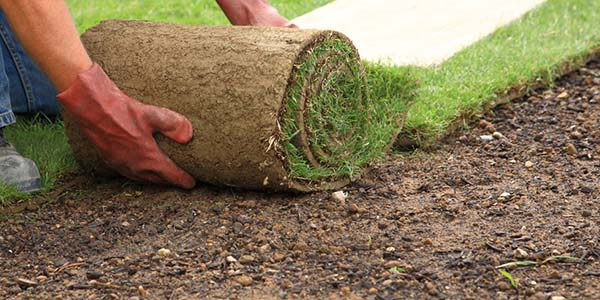 Safety Harbor Sod Services
