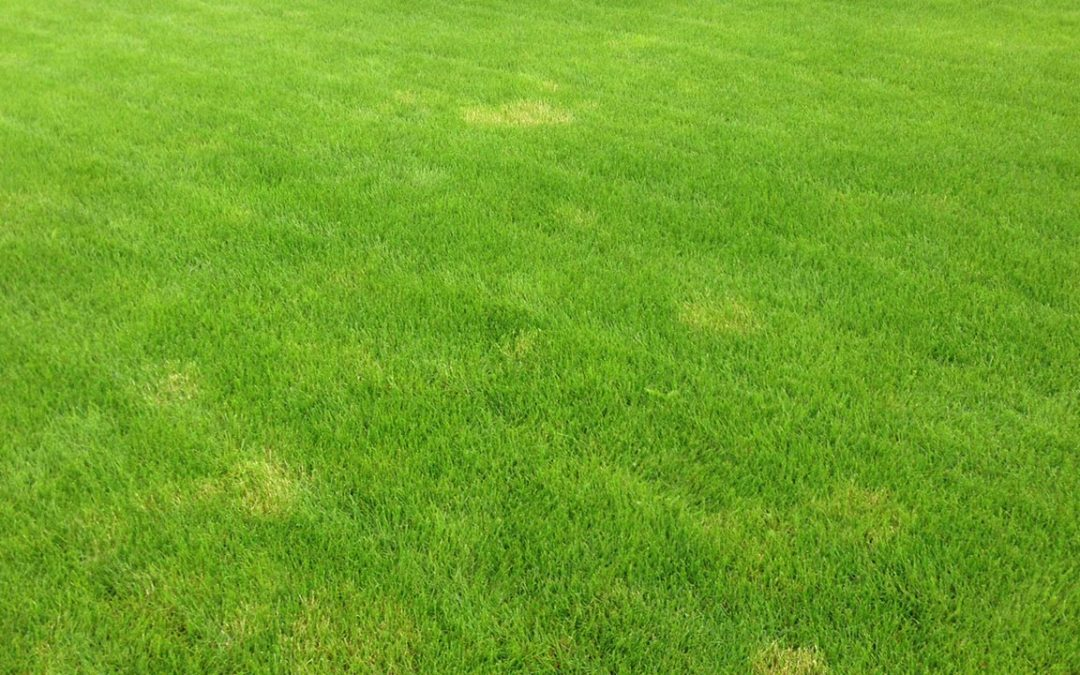 How to Avoid Dead Spots on Your Grass