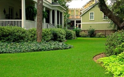 How to Make Sure Your Grass is Green this Spring