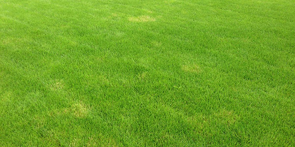 Avoid Dead Spots on Your Grass