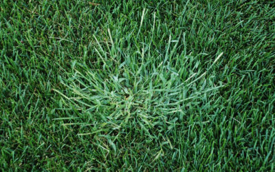 How to Identify and Eliminate Common Florida Weeds