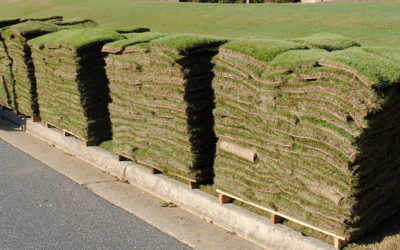 Is Your Yard Right for Zoysia Sod?