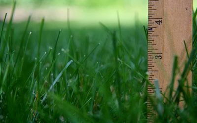 What's the Best Summer Mowing Height?