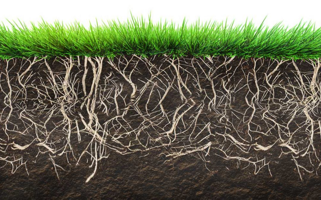 Grass Seed Options for Fall