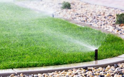 Does Your Florida Lawn Require Less Water in Winter?